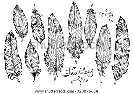 Hand drawn bird feathers closeup isolated on white background set. Boho style. Vector illustration