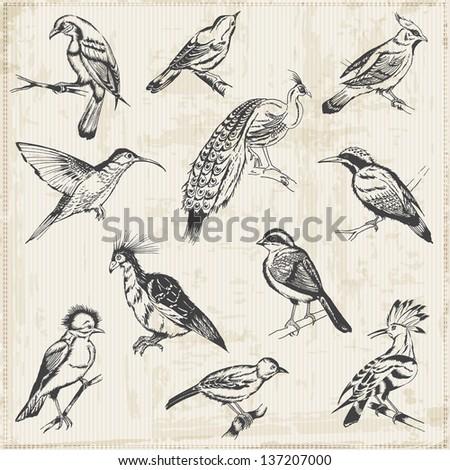 Hand drawn Birds - for design and scrapbook - in vector - stock vector