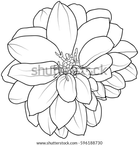 Hand drawn black white flower outline stock vector 596188730 hand drawn black and white flower outline design element mightylinksfo Gallery