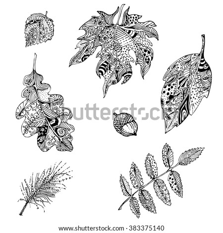 hand drawn black white doodle leaves of mountain ash, oak, apple tree, pine branch . Ethnic patterned vector illustration. Sketch for adult antistress coloring page, tattoo, poster, print, t-shirt - stock vector