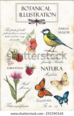 Hand drawn botanical illustration in vintage style.Vector set of watercolor hand drawn berries, herbs,titmouse, butterflies,raspberry and pink flower Isolated on vintage background - stock vector
