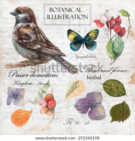 Hand drawn botanical illustration in vintage style.Vector set of watercolor hand drawn sparrow,butterflies,barberry and dry flower Isolated on vintage background  with letters and text. - stock vector