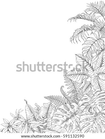 Hand Drawn Branches And Leaves Of Tropical Plants Corner Background With Space For Text