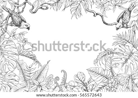 Hand Drawn Branches And Leaves Of Tropical Plants Monochrome Rectangle Horizontal Floral Frame With Birds