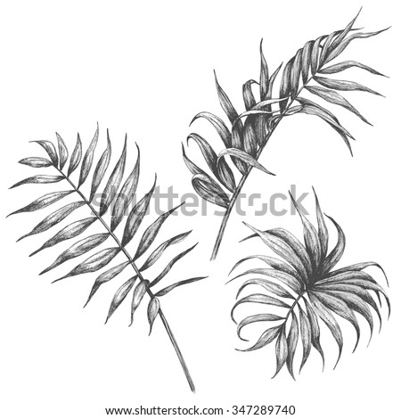 Hand drawn branches and leaves of tropical plants.  Palm fronds isolated on white background. - stock vector