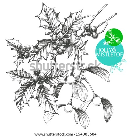 Hand drawn clip art illustration of famous Christmas plants - mistletoe and holly - stock vector