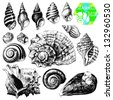Hand drawn collection of various seashell illustrations isolated on white background - stock vector