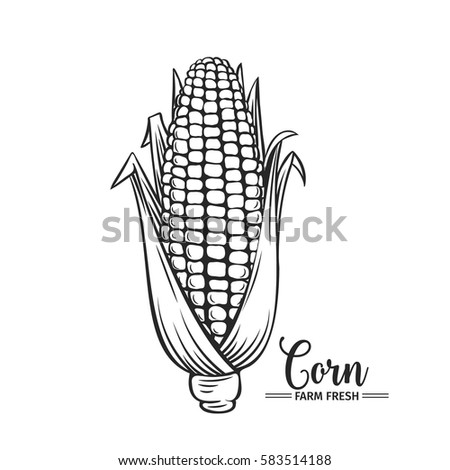 Hand drawn corn icon. Vector badge vegetable in the old ink style for brochures, banner, restaurant menu and market