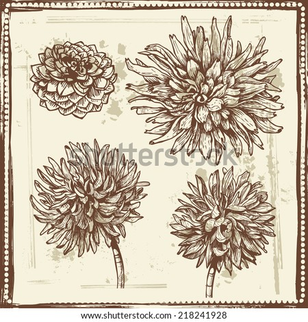 Hand drawn dahlia flowers vintage sketch.  All objects are conveniently grouped  and are easily editable. - stock vector