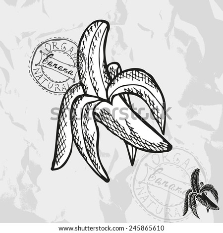 Hand drawn decorative banana fruits, design elements. Can be used for cards, invitations, gift wrap, print, scrapbooking. Kitchen theme - stock vector