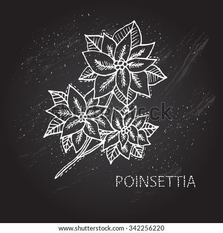 Hand drawn decorative christmas poinsettia flowers, design elements. Can be used for cards, invitations, gift wrap, print, scrapbooking. Christmas and New Year chalkboard background - stock vector