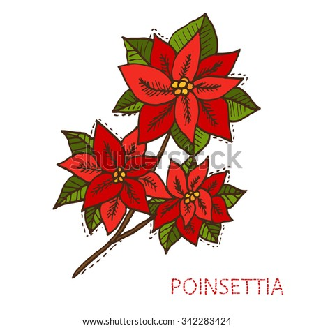 Hand drawn decorative christmas poinsettia flowers, design elements. Can be used for cards, invitations, gift wrap, print, scrapbooking. Christmas and New Year background
