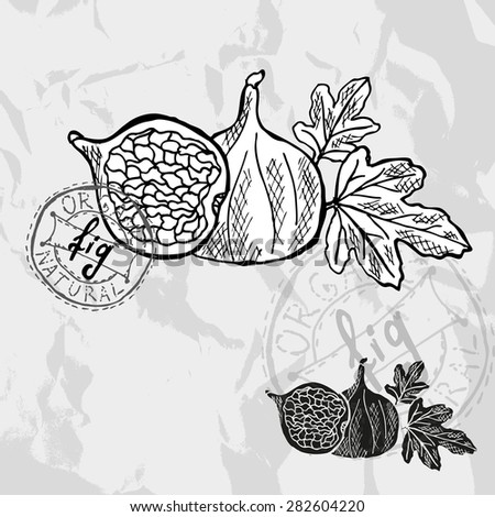 Hand drawn decorative fig fruits, design elements. Can be used for cards, invitations, gift wrap, print, scrapbooking. Kitchen theme