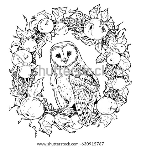 hand drawn decorative illustration of barn owl; coloring page with owl and wreath from apples and tree branches