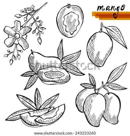 Hand drawn decorative mango fruits, whole and sliced, and mango flower. Design elements. Can be used for cards, invitations, scrapbooking, print, manufacturing  - stock vector