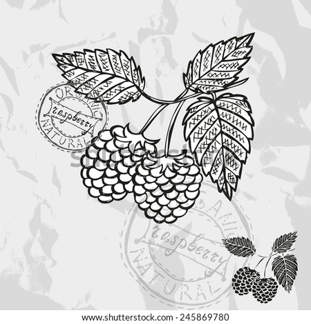 Hand drawn decorative raspberries, design elements. Can be used for cards, invitations, gift wrap, print, scrapbooking. Kitchen theme - stock vector