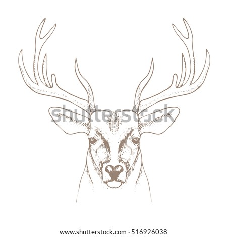 hand drawn deer head with horns. vector illustration