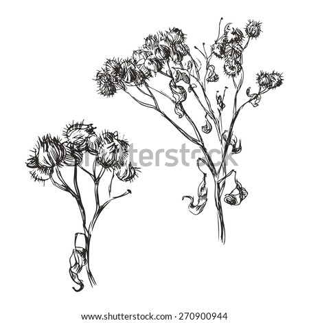 Hand drawn dry branch of burdock - stock vector