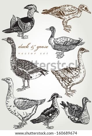 hand drawn duck & goose vector set - stock vector