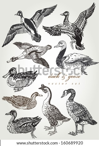 hand drawn duck & goose vector set - stock vector