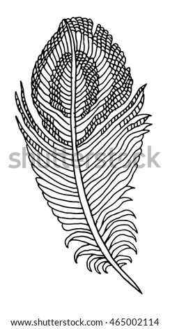 hand drawn feather on white background