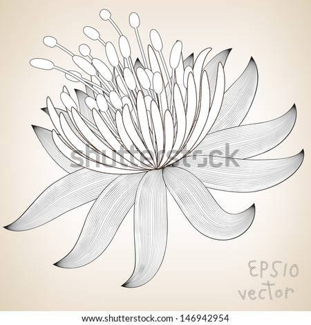 Hand Drawn Floral Elements for Design, EPS10 Vector background - stock vector