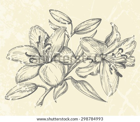 Hand-drawn floral illustration of Lily Flower heads with bud and leaves isolated on beige background. Pen and ink style drawing with texture.