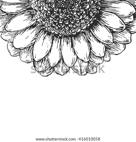 Hand drawn flower chrysanthemum isolated on white background. Abstract floral background. Black and white vector illustration - stock vector