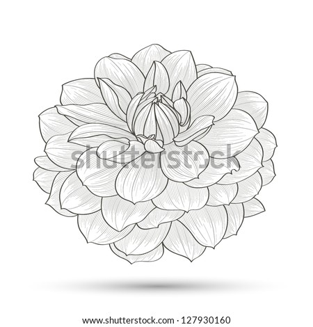 Hand-drawn flower dahlia. Element for design. Abstract floral background. - stock vector