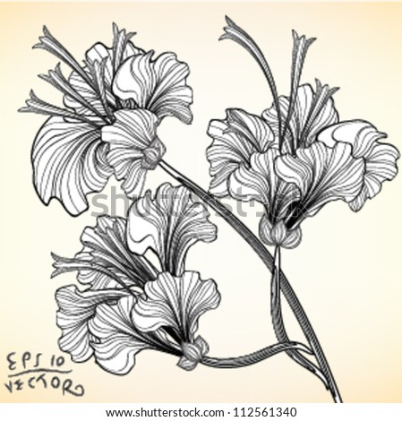 Hand drawn flower Hibiscus elements for design, EPS10 Vector background