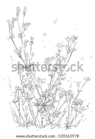 Hand drawn flowers - stock vector
