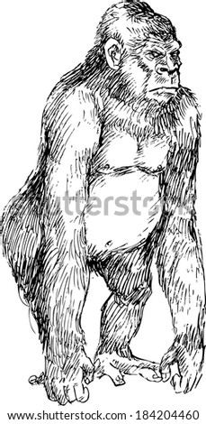 hand drawn gorilla - stock vector