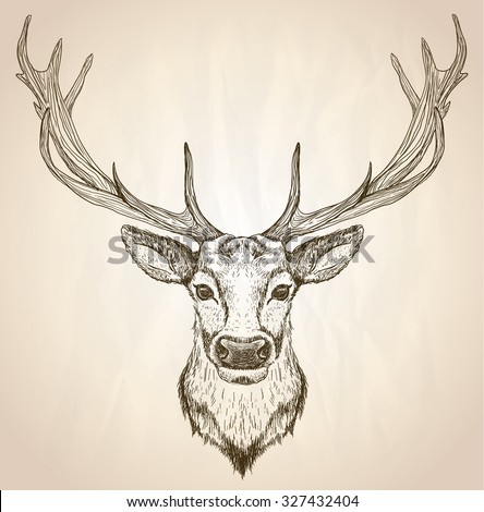 Hand drawn graphic sketch illustration of a deer head with big antlers, front view, vector wildlife poster. - stock vector