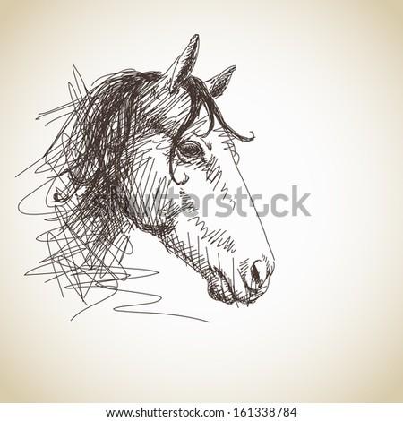 Hand drawn horse head - stock vector