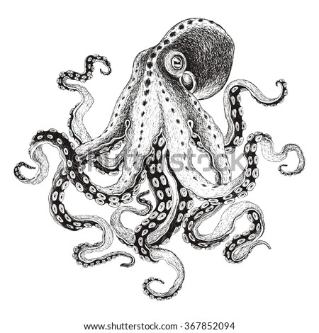Hand-drawn illustration octopus, vector isolate on white background. - stock vector