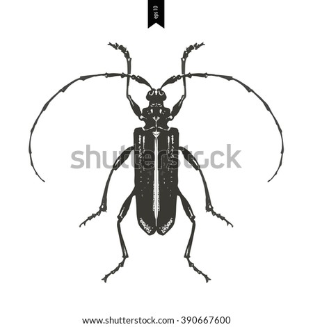 Hand drawn illustration of beetle on a wight background. vector illustration