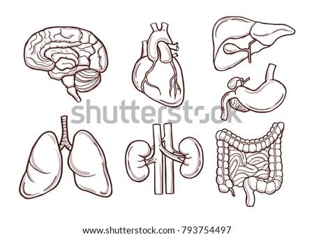 Human Anatomy Back | human anatomy drawing | Human body ...