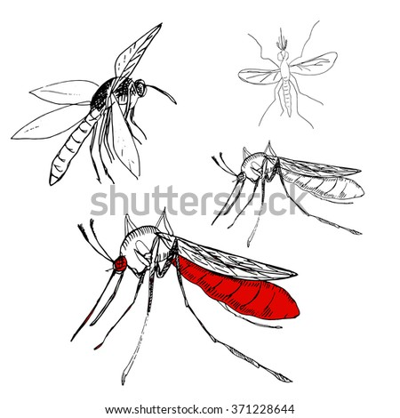 Hand drawn illustration of Zika virus dangerous.Set of Mosquitoes. - stock vector