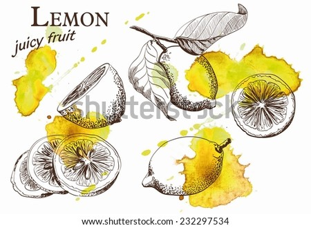 Hand drawn illustrations of beautiful yellow lemon fruits - stock vector