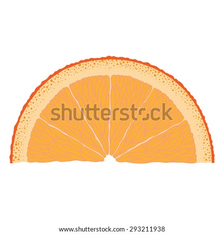 Hand-drawn image of orange slice. Vector graphic.
