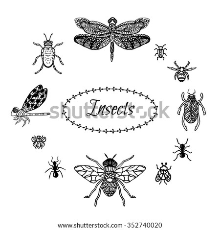 Hand drawn insect set in zentangle style. Black ink dragonfly, bugs, spider and butterflies. Isolated on white stylized hexapods for coloring pages and fabric prints. Sketched doodles.