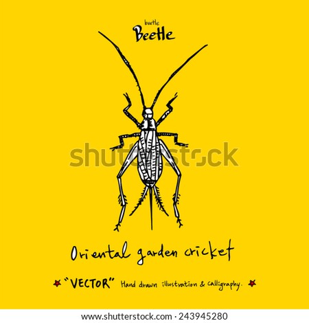 Hand drawn insect - vector illustrations - stock vector