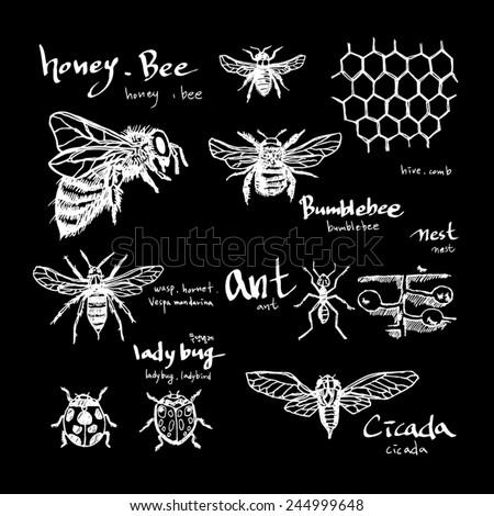 Hand drawn insect - vector illustrations / blackboard version - stock vector