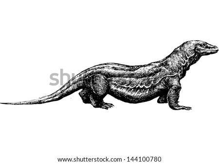 hand drawn komodo dragon - stock vector