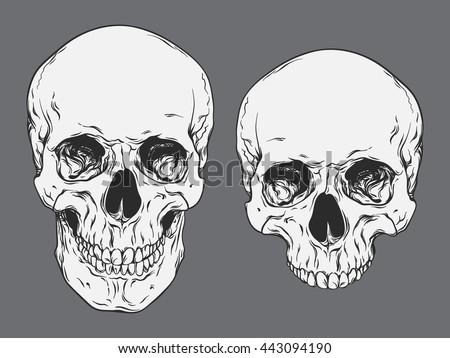 Hand drawn line art anatomically correct human skulls set isolated vector illustration - stock vector
