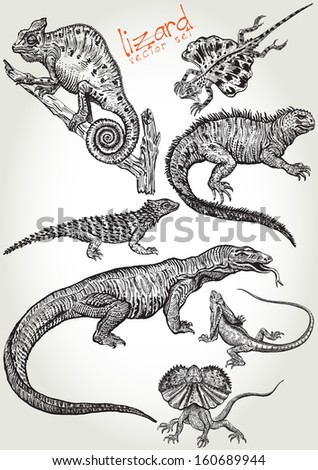 hand drawn lizard vector set - stock vector