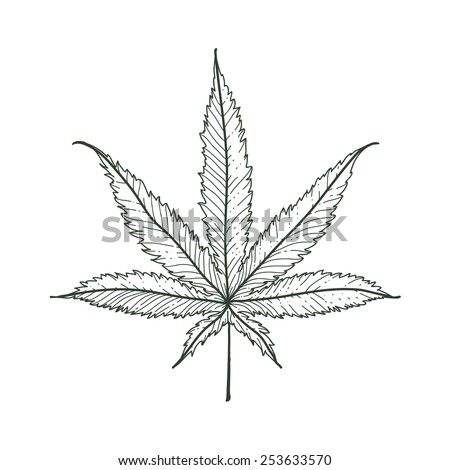 Hand-drawn marijuana leaf. Vector illustration. - stock vector