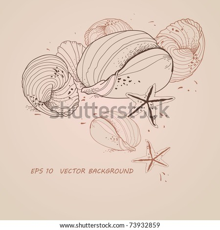 hand drawn marine still life with sea shells and starfishes - stock vector