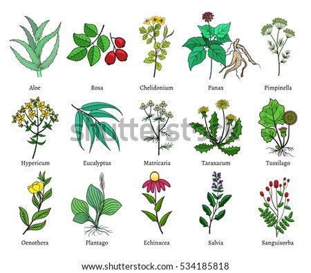 useful plants Useful native plants of the mid-atlantic usa : east coast usa natives from philadelphia to virginia the tallamy column refers to species identified by doug tallamy as particularly good hosts for native caterpillars, an anchor of the food chain.