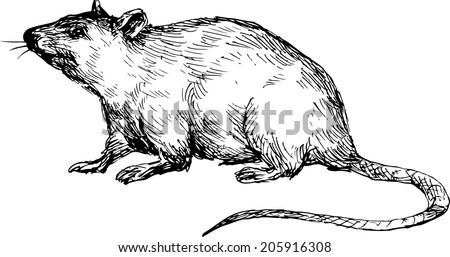 hand drawn mouse - stock vector